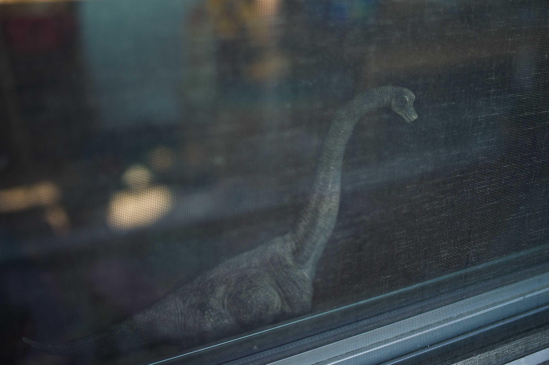 Brooklyn, NY (Brachiosaurus) 2014