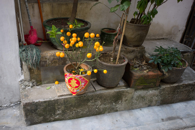 Guangzhou (Fruit) 2011
