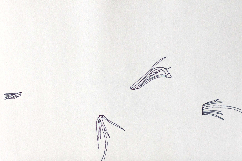 Camera Lucida Lilies, Study