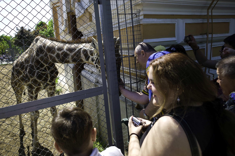 Moscow Zoo (The Giraffe Whisperer)