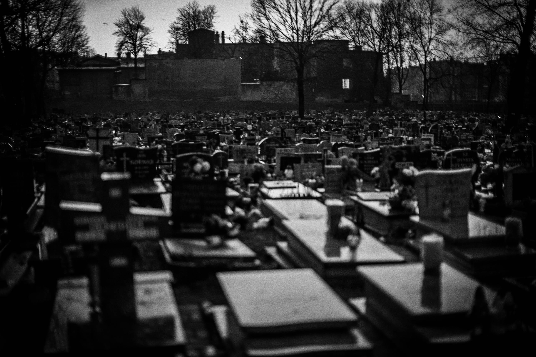 Świętochłowice (Cemetery) 2014